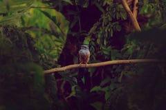 En härlig fågel Arkivfoton