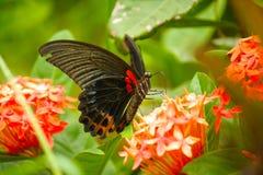 En härlig fjäril Arkivfoton