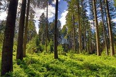 En härlig grön skog i Bayern Fotografering för Bildbyråer