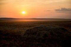 En härlig guld- solnedgång på ett höfält royaltyfri foto