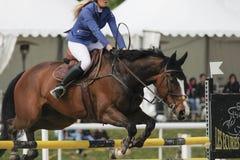 En härlig hästshow som hoppar under en hoppstrid royaltyfri foto
