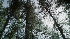 En härlig högväxt skog arkivfilmer