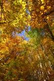 En härlig höstdag i skogen Arkivfoto