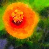 En härlig hibiskusmålning royaltyfri fotografi