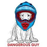 En härlig hund i en motorcykelhjälm Fullblods- valp Vektorillustration för en vykort eller en affisch stock illustrationer
