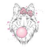 En härlig hund med en pilbåge blåser en boll av idisslad föda Fullblods- valp collie Fotografering för Bildbyråer