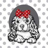 En härlig hund med en pilbåge på hans huvud Gullig spaniel Fullblods- valp royaltyfri illustrationer