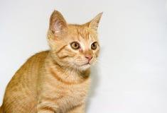 En härlig katt Arkivfoton