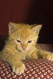 En härlig katt Royaltyfri Bild