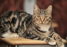 En härlig katt Fotografering för Bildbyråer