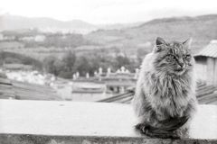 En härlig katt bor i den Guihua templet Songzan Royaltyfria Foton