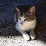 En härlig kattunge namngav Nico som gör kattens material royaltyfri foto