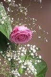 En härlig lila steg Arkivbild