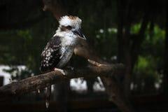 En härlig liten fågel i zoo royaltyfri bild