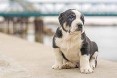 En härlig liten hund poserar utanför royaltyfri bild