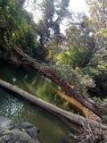 En härlig naturlig flod och en trädbro i Sri Lanka arkivfoto