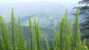 En härlig naturlig skönhet på berget arkivfilmer