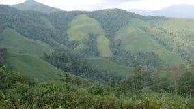 En härlig naturlig skönhet på berget på Nan Province, Thailand lager videofilmer