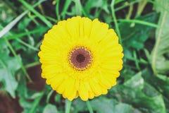 En härlig och gul blomma Royaltyfria Foton