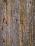 En härlig och prålig trädstruktur med en droppe av kåda royaltyfria foton