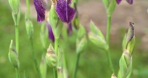 En härlig Odyssey 7Q för orkidéblomma 4K FS700 stock video