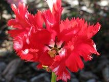 En härlig oidentifierad blomma på en bakgrund av det wood skället Royaltyfri Bild