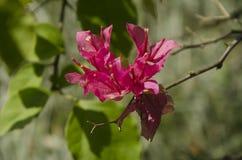 En härlig röd blomma på en filial royaltyfri foto