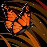 En härlig röd fjäril på en gräsbakgrund Royaltyfria Foton