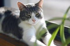 En härlig randig grå katt ligger på fönsterbrädan arkivbilder