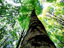 En härlig skog av ekar Arkivfoton