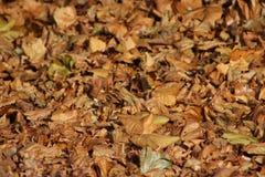 En härlig slinga av hösten Royaltyfri Fotografi