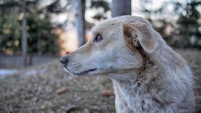 En härlig stående för lös hund som tänker, högt upp i bergen Arkivfoton