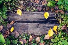 En härlig träbakgrund, ett blad av en höstdag för gul gräsplan i natur, en sprucken planka på jordningen textur Royaltyfria Bilder