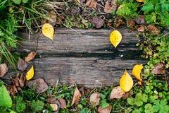 En härlig träbakgrund, ett blad av en höstdag för gul gräsplan i natur, en sprucken planka på jordningen textur Arkivfoto