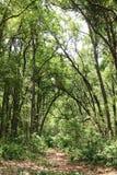 En härlig väg till och med djungeln royaltyfri foto