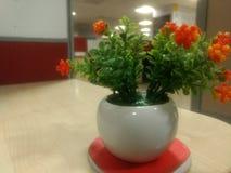 En härlig växt på arbetsstället royaltyfri foto