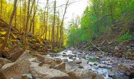 En härlig vattenfall i skogdjurlivet, vattenfall i en öde skogtaiga Royaltyfria Foton