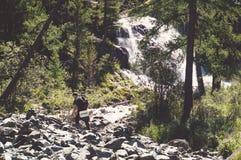 En härlig vattenfall i skogen Royaltyfria Foton