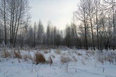 En härlig vinter landskap Arkivbilder