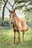 En häst royaltyfria bilder