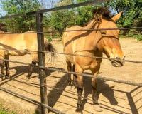 En häst Arkivbilder