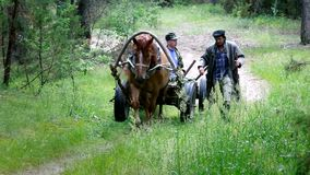 En häst dragen vagn med taxichauffören och följet arkivfilmer