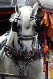 En häst drar en vagn med skygglappar Arkivfoto
