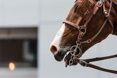 En häst går i ståta under bögen Pride Festival Fotografering för Bildbyråer