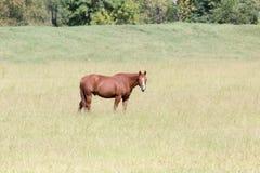 En häst i en äng arkivbilder