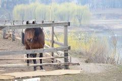 En häst i en gård Arkivfoto