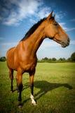 En häst i färg Julian Bound Arkivfoto