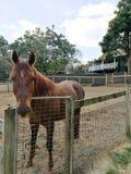 En häst i en lantgård Royaltyfri Fotografi
