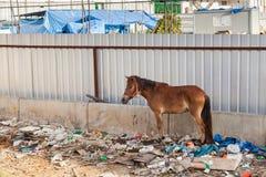 En häst i Thailand står i avfallsen Arkivfoton