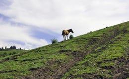 En häst i Yili prarie royaltyfri fotografi